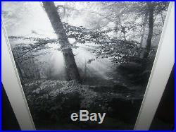 Clyde Butcher1942-Artist Photographer Signed Photo Litho Sunlit Forest Framed