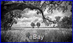 Clyde Butcher original photograph Myakka Oak Myakka River, Sarasota, FL
