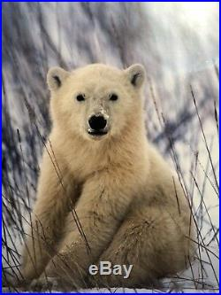 Thomas Mangelsen First Portrait Polar Bear Cub Wildlife Art Photo Print Signed